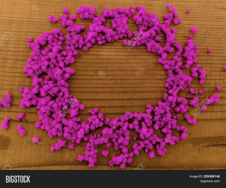 Round Pink Flowers Image Photo Free Trial Bigstock