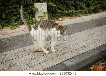 Invalid Cat With Amputated Paw, Homeless Cat Wit Tree Legs.