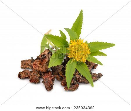 Rhodiola Rosea, Roots With Flowers.