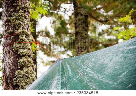 Wet Tent Green Tents In A Pine Forest In The Rain