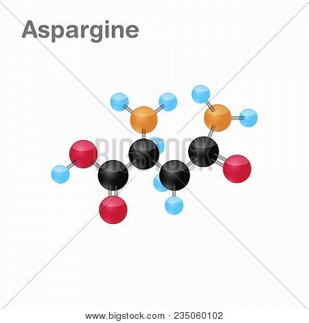 Molecule Of Asparagine, Asn, An Amino Acid Used In The Biosynthesis Of Proteins, Vector Illustration