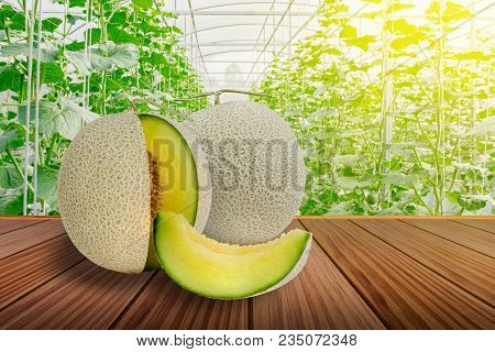 Sliced Green Melon Or Cantaloupe On Brown Wooden Terrace In The Greenhouse