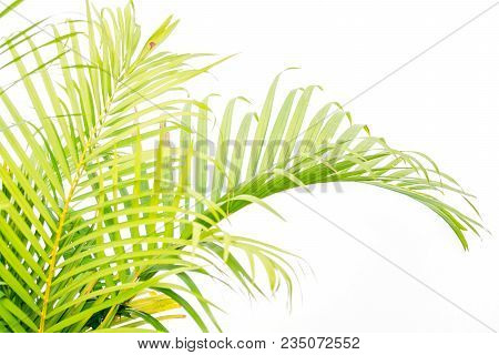 Close Up Green Palm Leaves And Shadows On A White Wall
