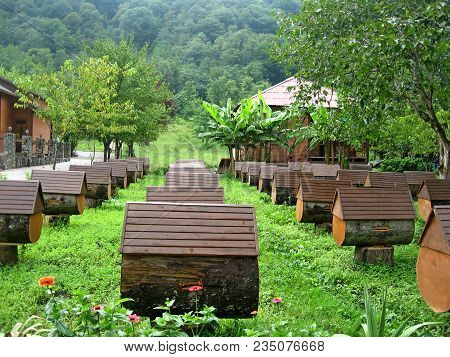 Apiary In Abkhazia. Hives Of Bees In Apiary, Apiculture. Close-up View Of Wooden Bee-hive Units Of A