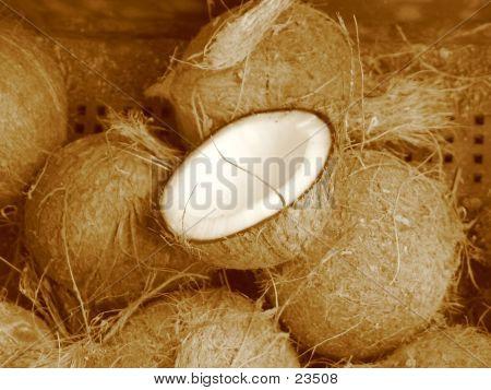 Coconuts (sepia)