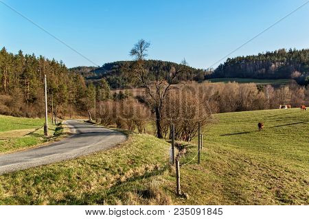 Spring Evening On Pastures. The Road Around Pastures With Cattle. Countryside In The Czech Republic.