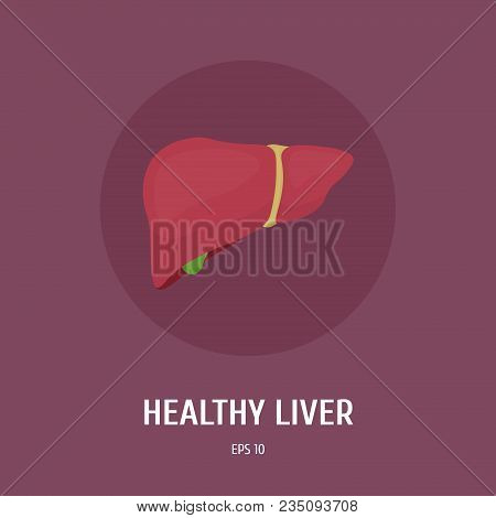 The Liver Of A Healthy Person. Internal Organs. Human Anatomy. Medicine. Vector Flat Illustration