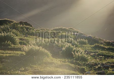 Green Moss And Grass In The Sunlight. Middle Atlas Mountain Range, Morocco, Africa
