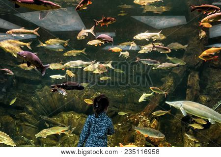 Child Looks At The Sea Fish In Aquarium. Little Girl Admires The Aquatic Life In The Zoo. Many Color