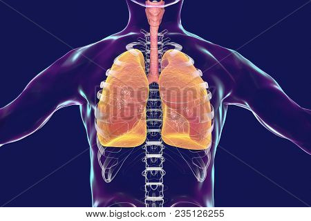 Human Respiratory System, Lungs, Trachea, Larynx And Male Body Silhouette With Skeleton, Realistic 3