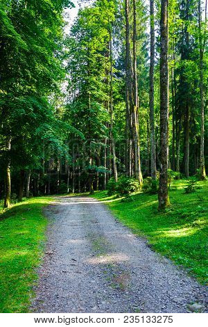Country Road Through Forest In Evening Light. Lovely Nature Scenery With Tall Trees And Green Foliag
