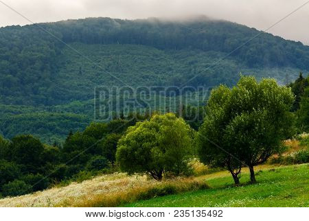 Abandoned Orchard In Mountains. Summer Countryside On A Cloudy Day
