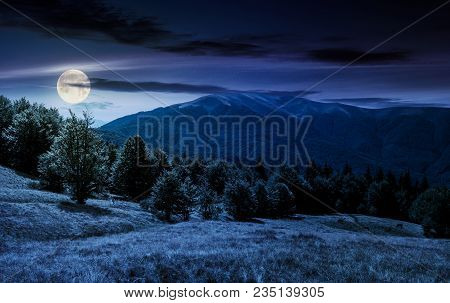 Beech Forest On Grassy Meadows In Mountains At Night In Full Moon Light. Beautiful Landscape At The