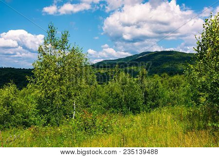 Beautiful Summer Landscape In Mountains. Grassy Meadow Among The Forest. Bright Blue Sky With Some C