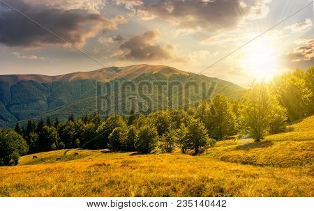Beech Forest On Grassy Meadows In Mountains At Sunset. Beautiful Landscape At The Foot Of Carpathian