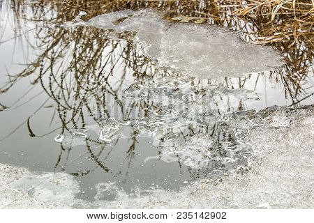 Reflection Of Grass On Frozen Water Surface.high Grass Is Reflected In Water-winter Nature.