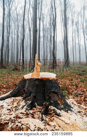 Logged Tree Stump. Tree Stumps And Felled Forest Deforestation.