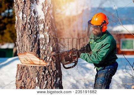 Chainsaw. Close-up Of Woodcutter Lumberjack Is Man Sawmill Saws Tree.