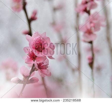 Floral Spring Border Background. Invitation.paper Cards Decorative Pattern.border Or Frame And Copy