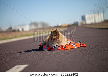Rescue Dog Is Lying On A Red Medic Jacket