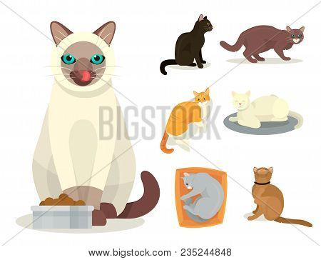 Different Cat Breeds Cute Kitty Pet Cartoon Cute Animal Character Set Illustration. Mammal Human Fri