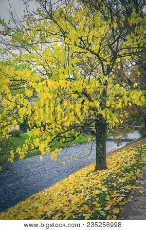 Lichtentaler Allee Park On The River Oos In Baden-baden, Germany In Autumn With Colorful Yellow Leav