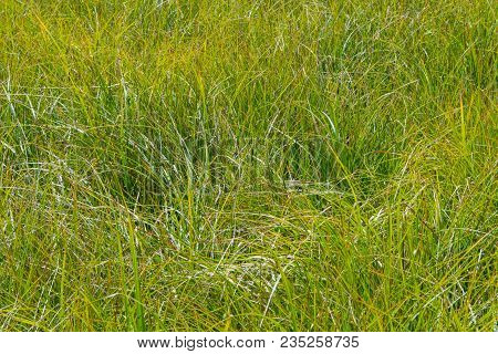 Close Up Of Grassy Marsh In Rocky Mountain Field
