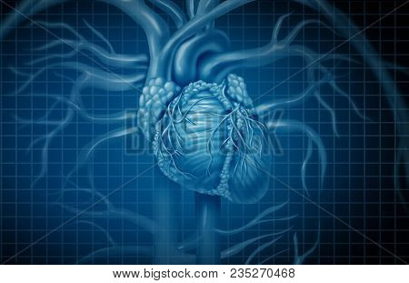 Human Heart Background And Cardiovascular Circulation Concept As Blood Circulatory And Cardiac Symbo
