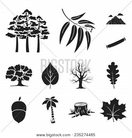 Forest And Nature Black Icons In Set Collection For Design. Forest Life Vector Symbol Stock  Illustr