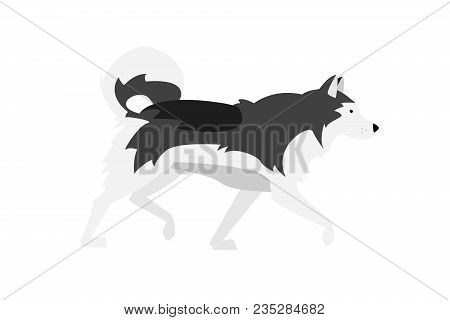 Vector Illustration: Alaskan Malamute. Black, Grey And White Dog - Nordic Breed. View From Profile.