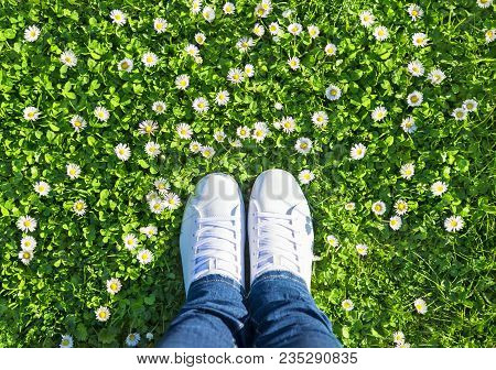 Legs In Jeans And White Sports Lace Up Sneakers Shoes On Green Meadow With Grass And Camomiles (dais