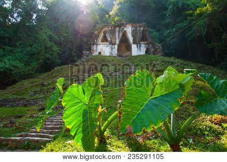 Huge Burdock Leaves And Ancient Mayan Cities. Ancient Templates Mayan Ruins Of Palenque - Chiapas, M