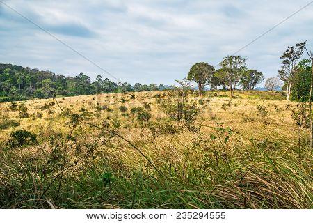 Grasslands At Khao Yai National Park. Thailand.