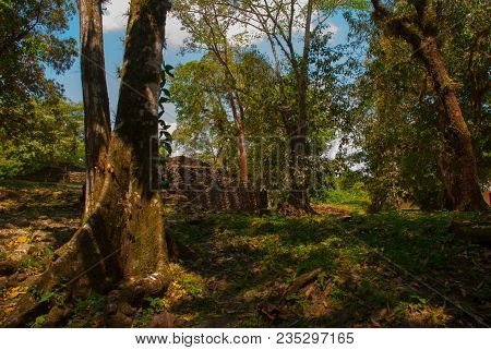 Palenque, Chiapas, Mexico: The Ancient Mayan City Is In The Jungle, Trees And Ruins. Ancient Mayan C