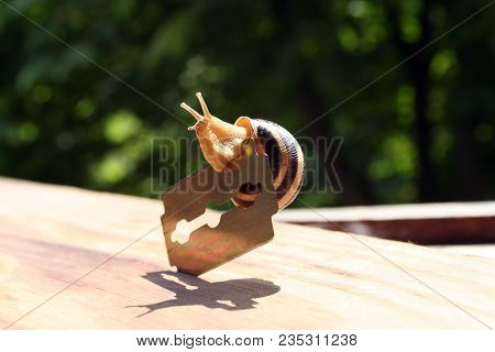 The Snail Is The Sharp Blade On The Wooden Surface