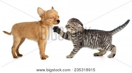 Little cat and dog playing together