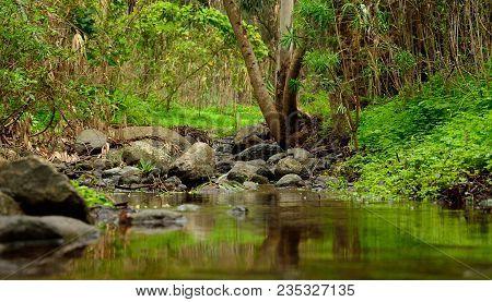 Natural Landscape, Rain Water And Vegetation, Gran Canaria, Canary Islands