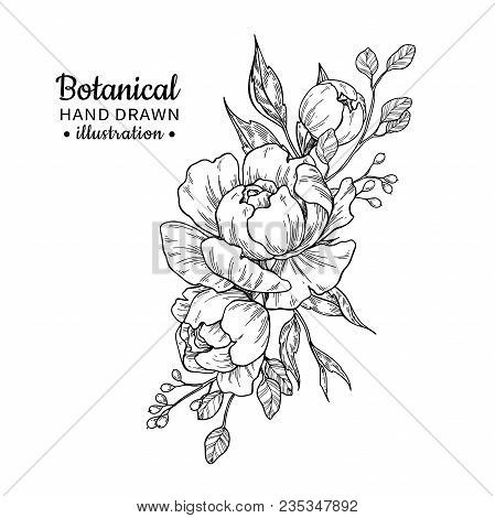 Vintage Flower Bouquet. Vector Drawing. Peony, Rose, Leaves And Berry Sketch. Engraved Botanical Com