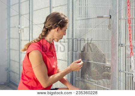 Zookeeper playing with cat in animal shelter in a cage