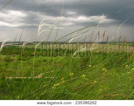 Lower Point Of Shooting Feather Grass In Spring Overcast Windy And Cloudy