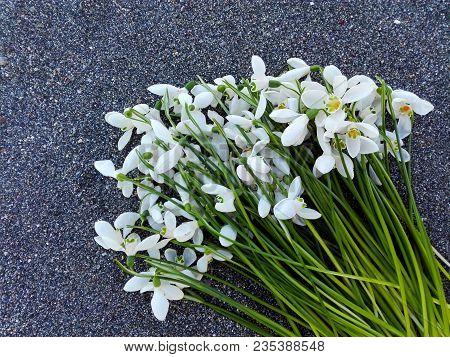 Snowdrop Flowers On Sand Texture Background. Tender White Snowdrop Flowers Bouquet On Sandy Beach Ba