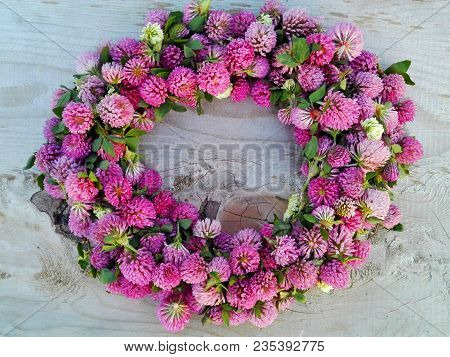 Clover Flower Pink Round Frame On Knotted Wooden Background. Medicinal Herb Clover Flowers On Circle