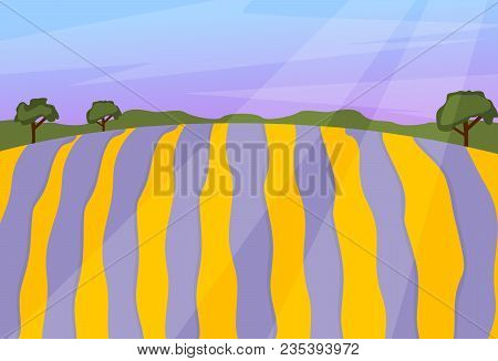 Lavender Field Vector Landscape Nature Violet Flower Sunlight Purple Lavande Evening Natural Beautif