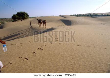 Camel Footprint