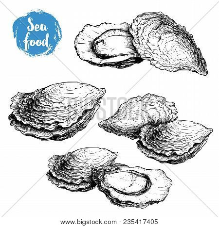 Hand Drawn Sketch Oyster Compositions Set. Hand Drawn Illustration  Of Fresh Seafood. Isolated On Wh