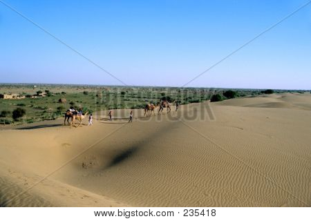 Dunes, Desert And Camels