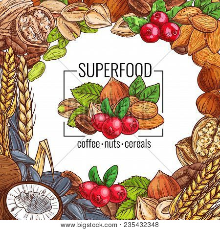 Superfood Poster With Nut, Cereal, Seed And Coffee Bean. Almond, Walnut And Pistachio, Hazelnut, Cof