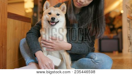 Woman brush her shiba inu dog at home