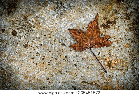 Dried Maple Leaf On Cement Floor. Copy Space For Graphic Designer.