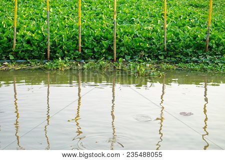 Water View With A Row Of Bamboo Poles And Messy Water Hyacinth Plant Growing On The River Surface